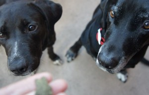 10 Tips for Preparing for a Foster Dog