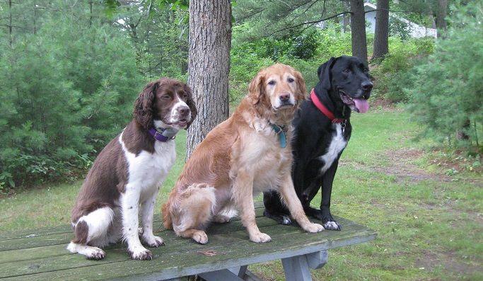 Sophie, Elsie, Ace