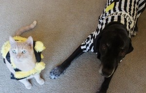 How to Get Your Dog To Love His Halloween Costume Using Treats