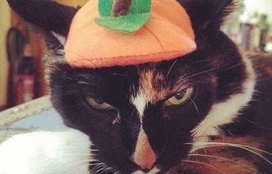 Getting Back at Our Dogs & Cats – Pets in Halloween Costumes