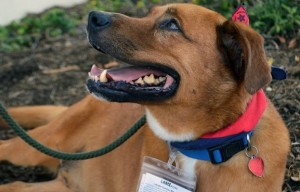 Help a Shelter Dog – Foster for Just One Weekend