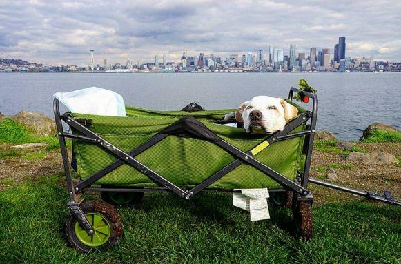 Pet Wagon The Wagon
