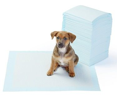 Puppy Potty Pee Pads