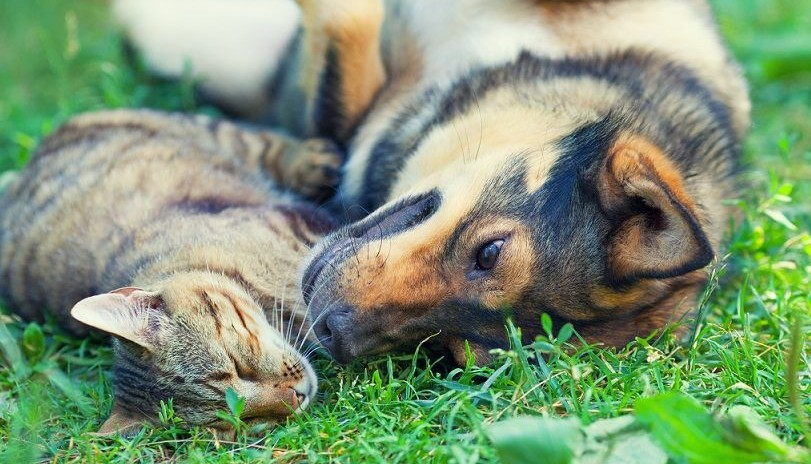 Do People Take Better Care of their Dogs than their Cats?