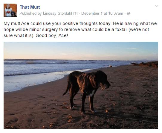 Ace facebook update