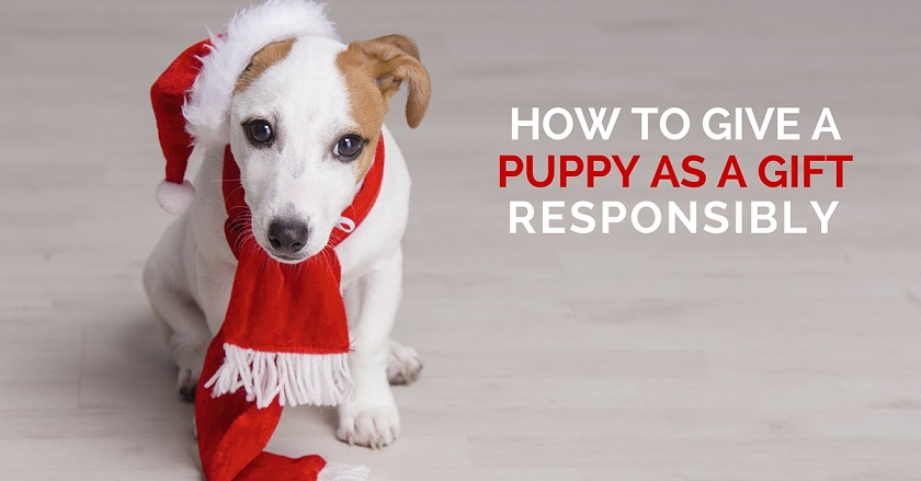 How to give a puppy as a gift responsibly