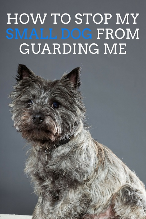 How to stop my small dog from guarding me