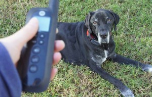 Keep Your Dog Contained With the Motorola TravelFence50 – Review And Giveaway
