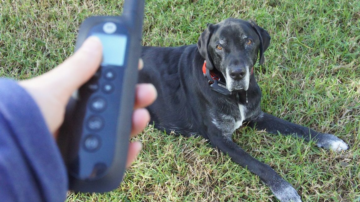 My dog with the Motorola TravelFence50