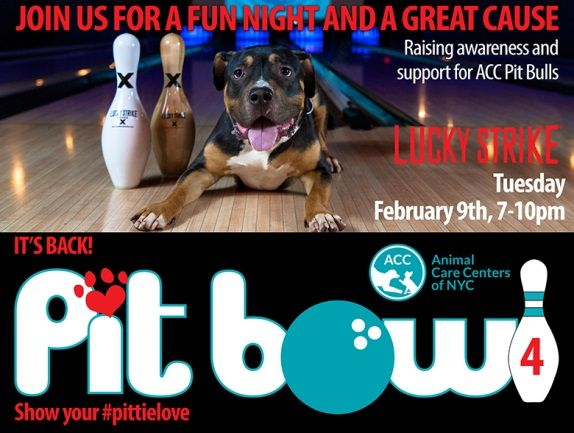 Pit Bowl fundraiser in NYC