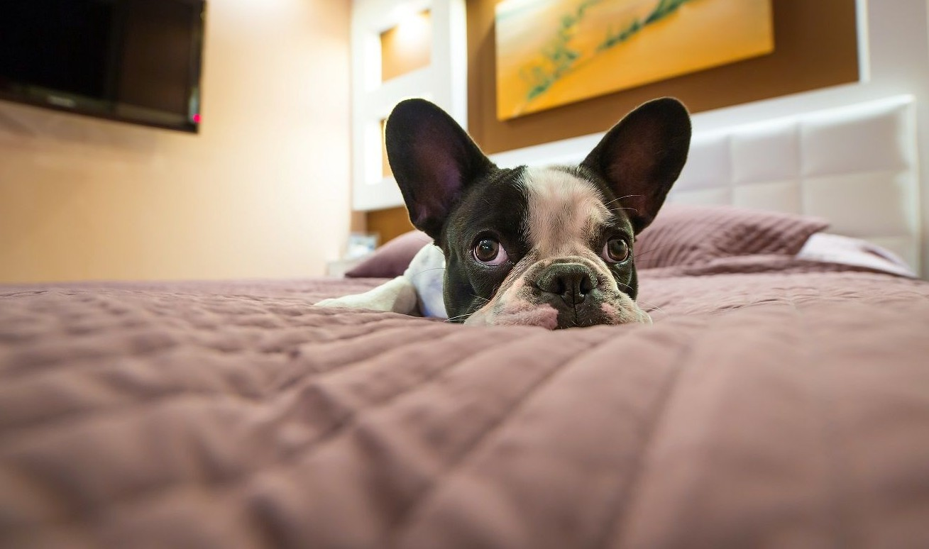 How to Stop A Dog From Growling At You On The Bed – 9 Tips