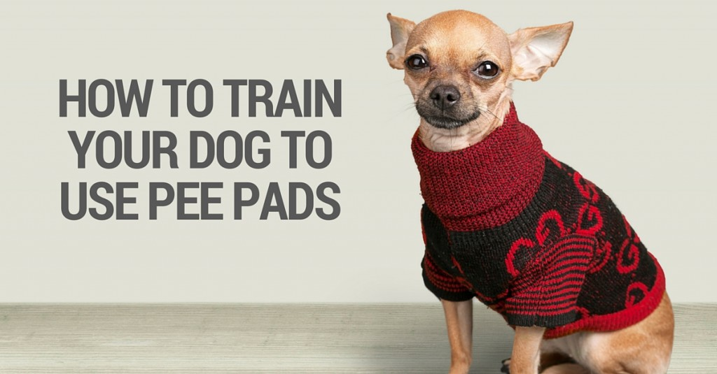 How To Train Dog To Pee On Fake Grass