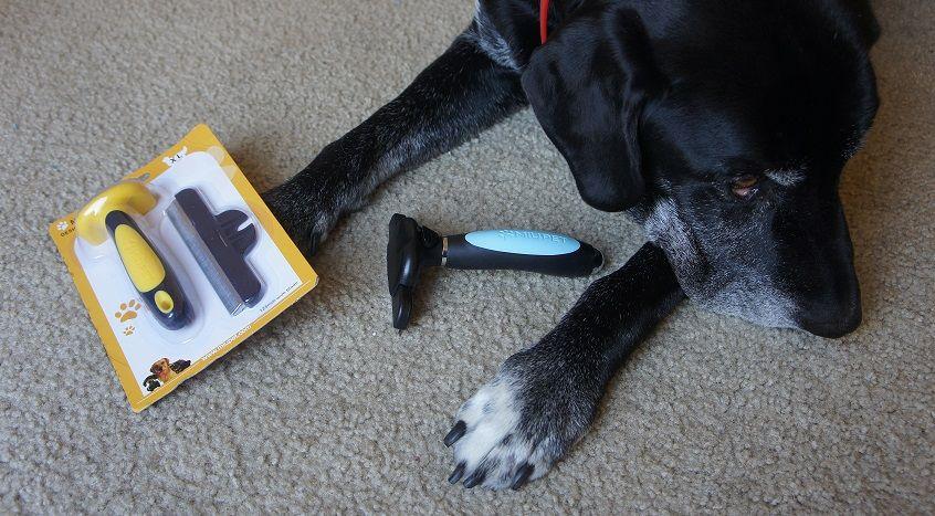 Win a MIU Pet de-shedding tool