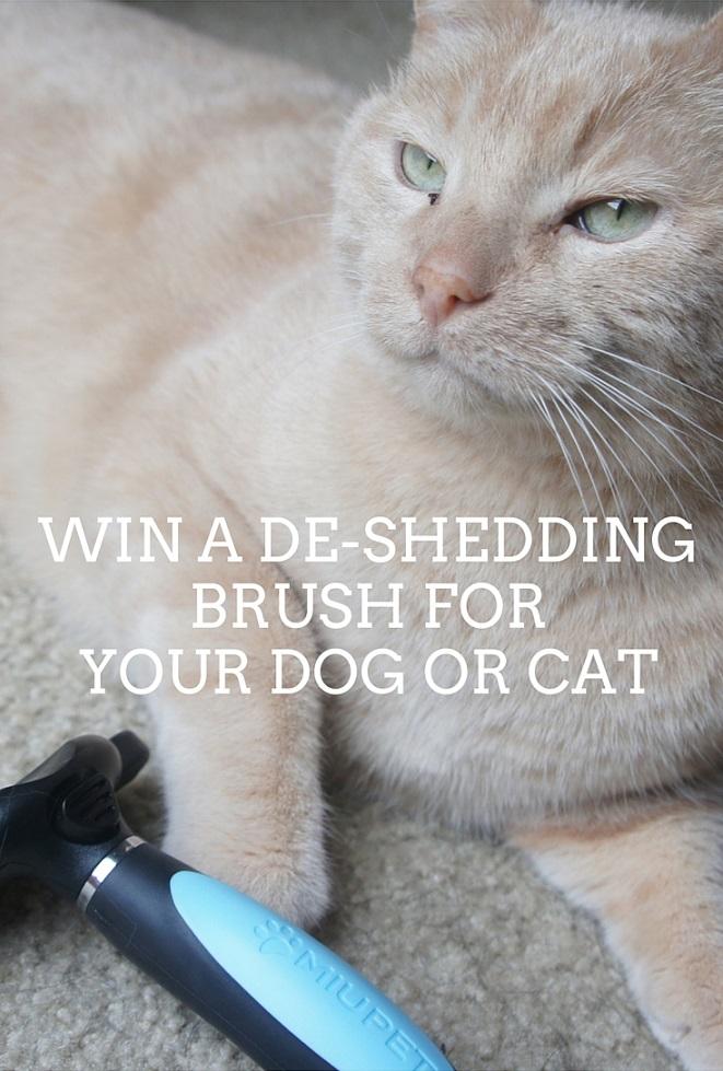 Win a de-shedding brush