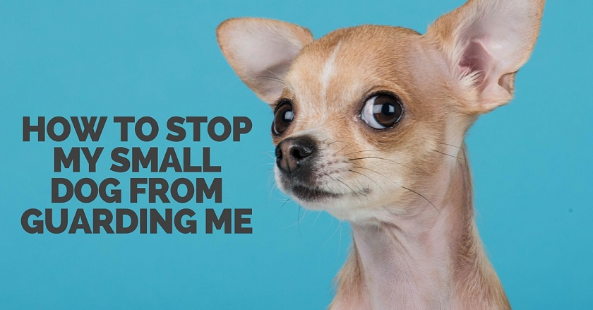How to stop a small dog's guarding