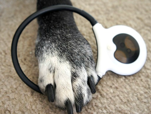 Ace's paw with the Assisi Loop