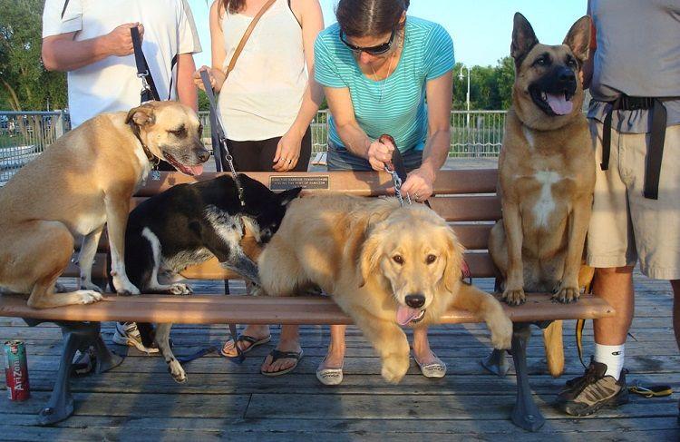 Dog training and hiking class