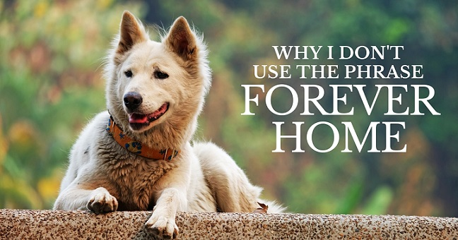 Why I don't use the phrase forever home