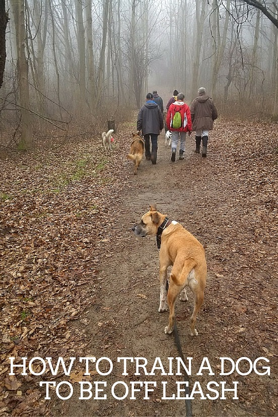 How to train a dog to be off leash - Tips on how to train your dog to be off leash by starting out slowly in a controlled environment. #dogtraining #dogs #hikewithdogs #boxermix