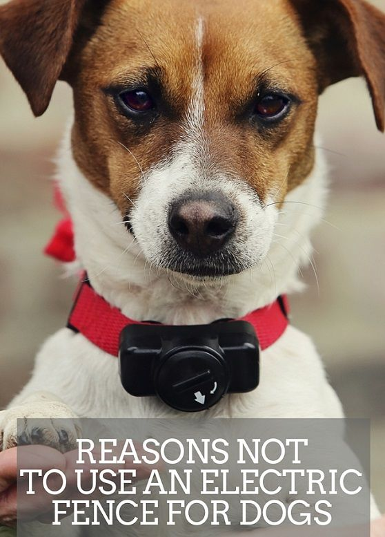 Reasons not to use an electric fence for dogs