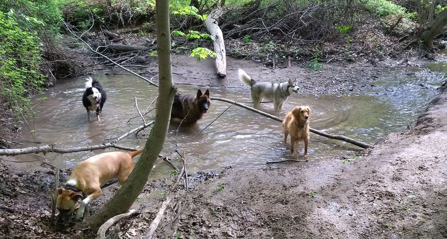 Teaching your dog to be off leash
