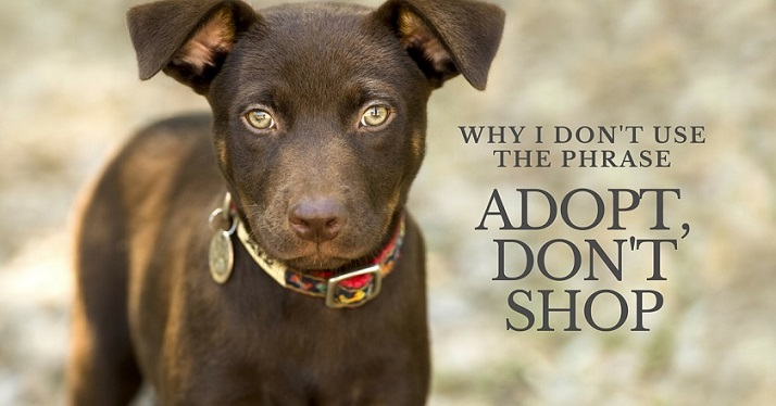 Why I don't use the phrase Adopt Don't Shop (1)