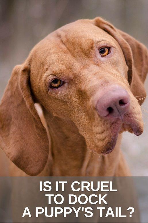 Is it cruel to dock a puppy's tail?