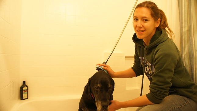 Ace getting a bath with MIU Pet Shower