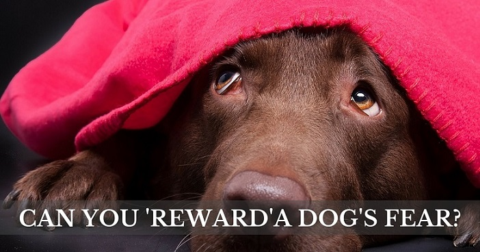Can you reward a dog's fear