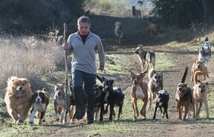 Accusing Cesar Millan of Animal Cruelty – When Dog Lovers Lose Perspective
