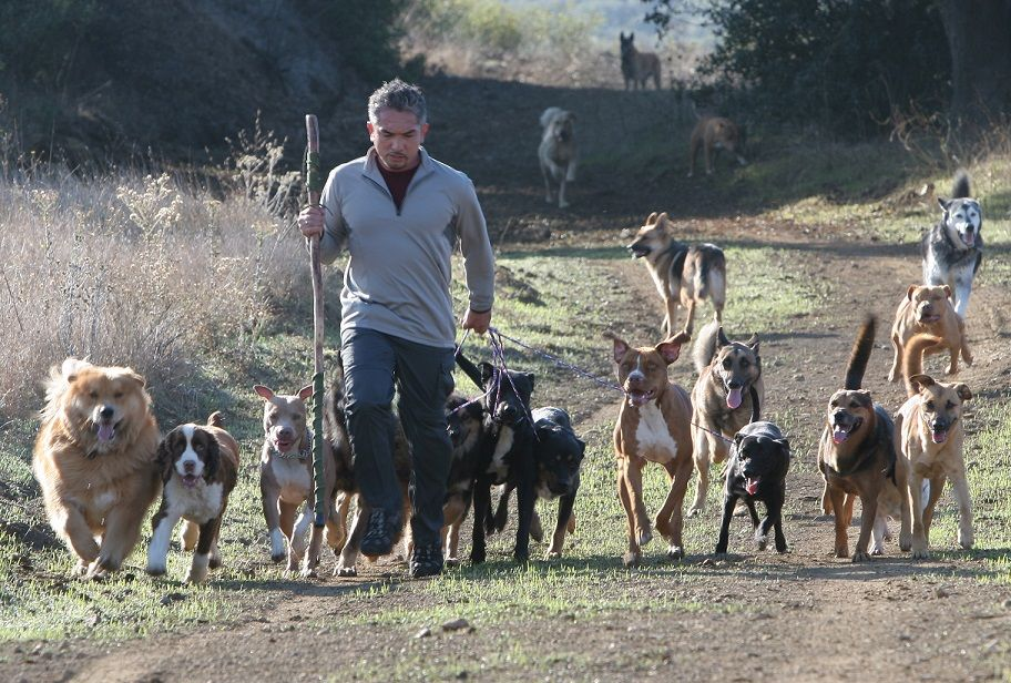 Cesar Millan animal cruelty investigation