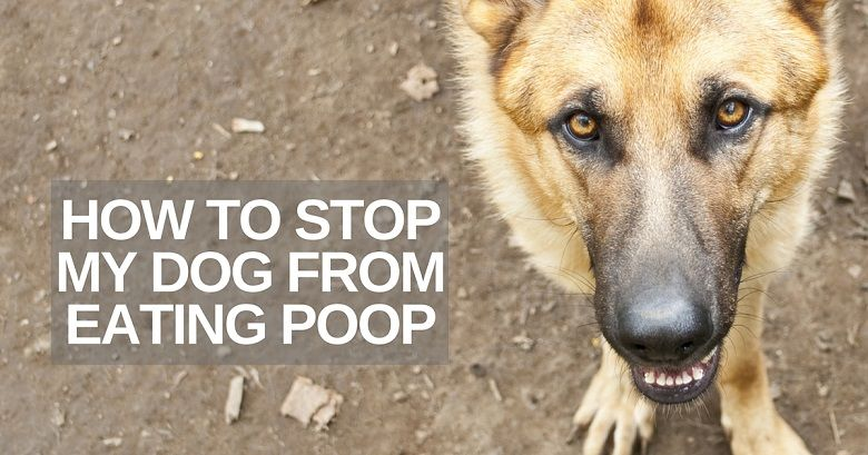 How do you stop a dog from eating poop?