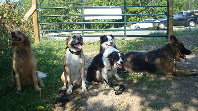 Off-leash hiking with your dog