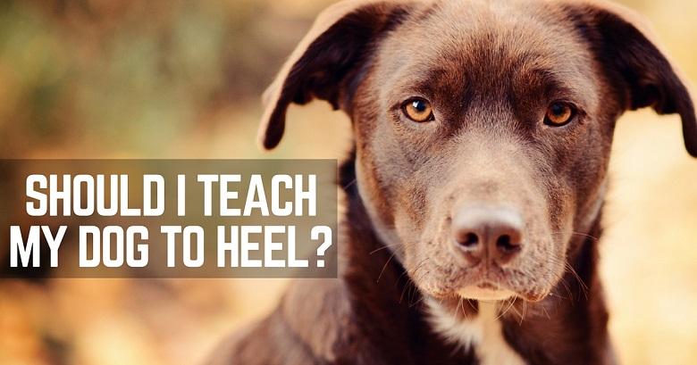 How To Teach My Dog To Walk To Heel