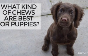What Kind of Chews Are Best for Puppies?
