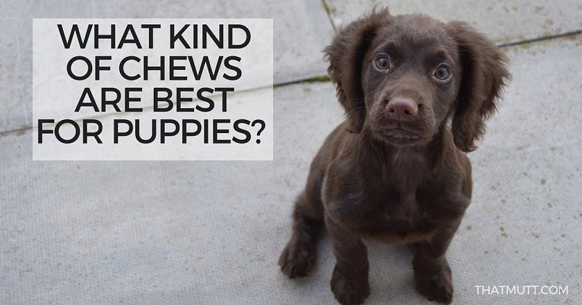 what chews are best for puppies