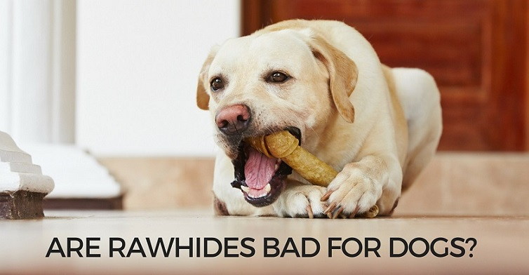 are rawhides bad for dogs and puppies. Black Bedroom Furniture Sets. Home Design Ideas