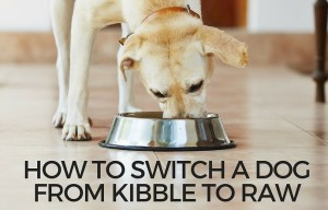 How to Switch A Dog From Kibble to Raw Dog Food