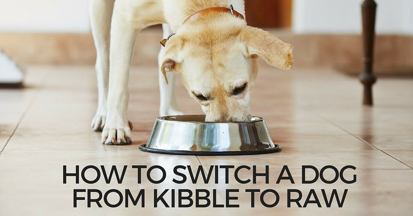 How to switch a dog from kibble to raw