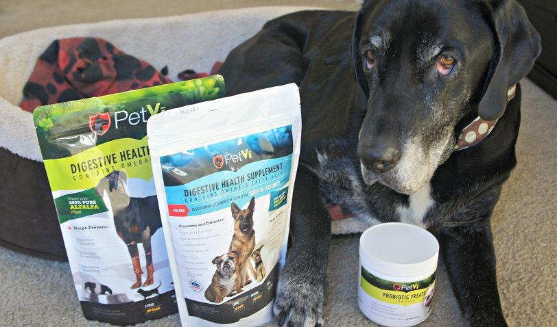 Should you give a dog supplements? My dog Ace with PetVi's supplements