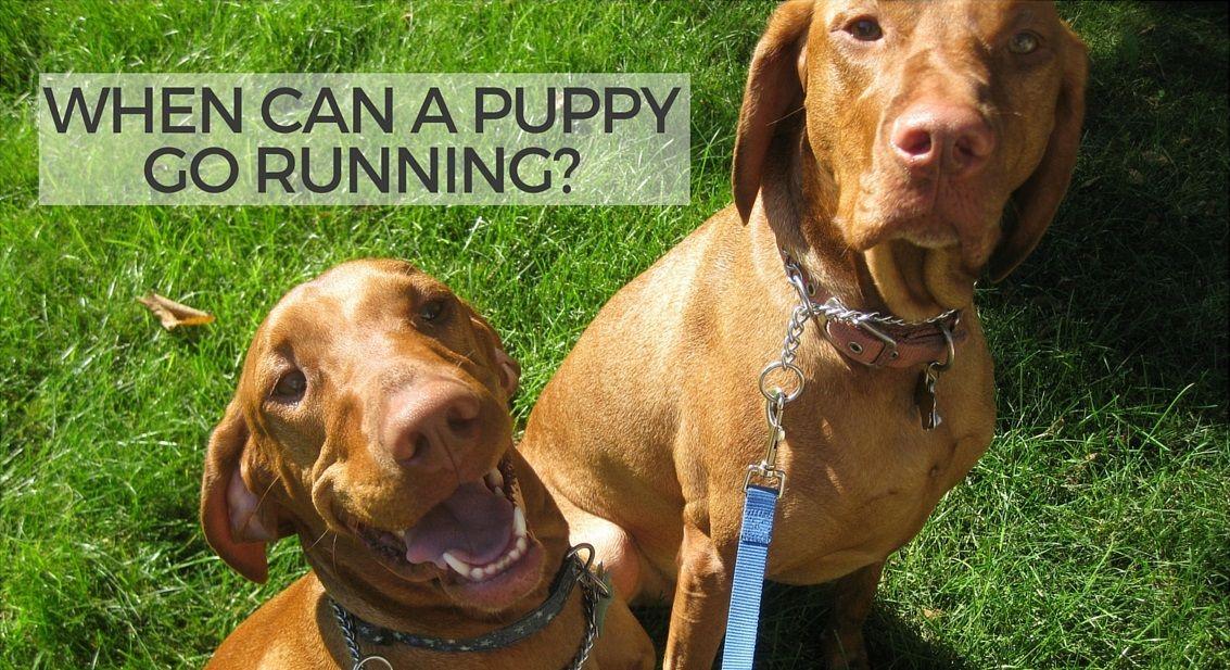 When can a puppy go running