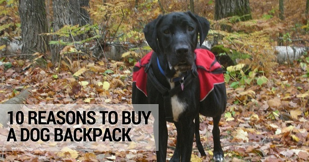 10 reasons to buy a dog backpack