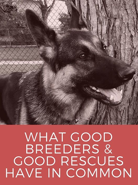Good breeders and good rescues