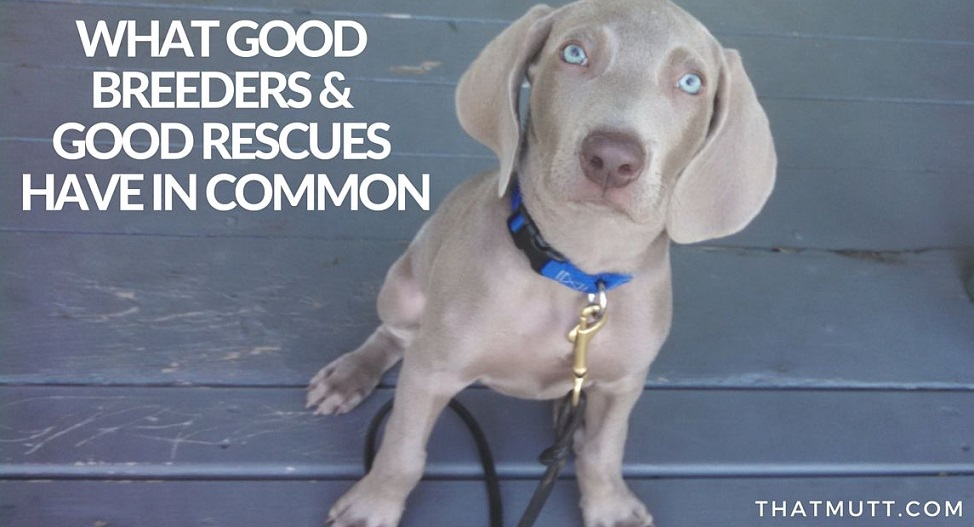Good breeders and good rescues - what they have in common