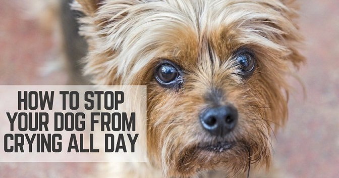 Stop Your Dog From Crying All Day