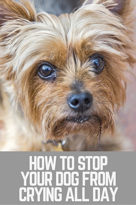 How to stop your dog from crying all day