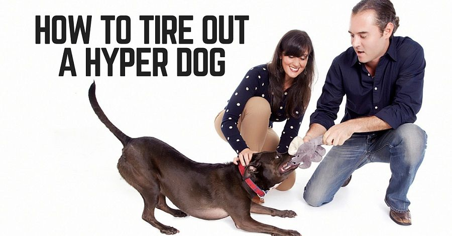 How to tire out a hyper, high energy dog