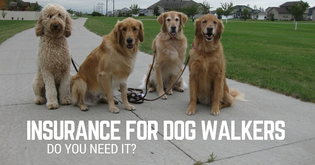 Insurance for pet sitters and dog walkers