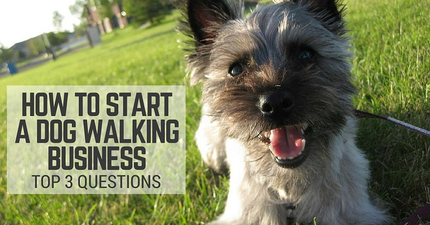 Questions about starting a dog walking business