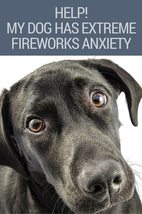 Extreme fireworks anxiety